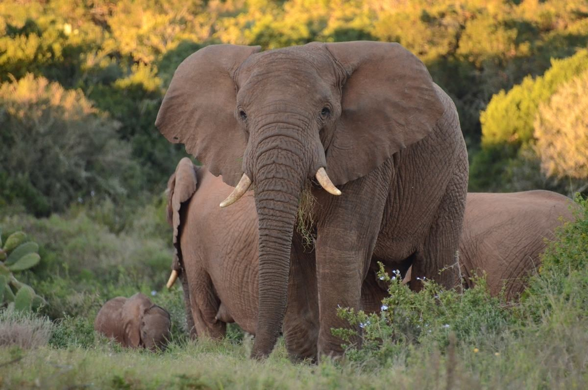 Big 5 Hunting Eastern Cape, South Africa,