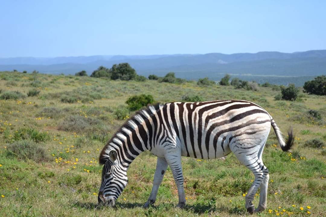 Plains Game Hunting Safaris Eastern Cape